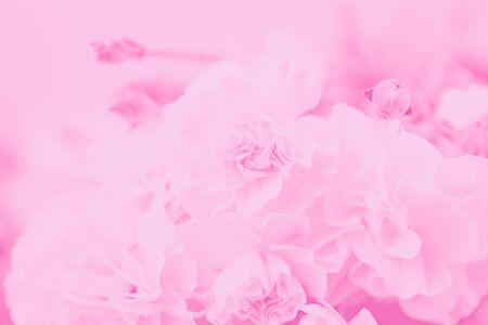 Photo pour Pale pink abstract background. Floral gradient background, delicate carnation flower pattern - image libre de droit