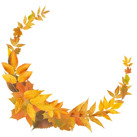 Nice frame made from yellow autumn leaves on white backgroundの写真素材