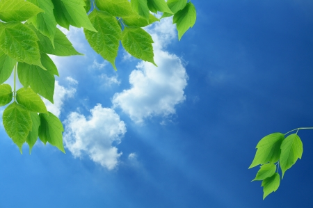 Nice border made from green leaves on background with blue sky and cloudsの写真素材