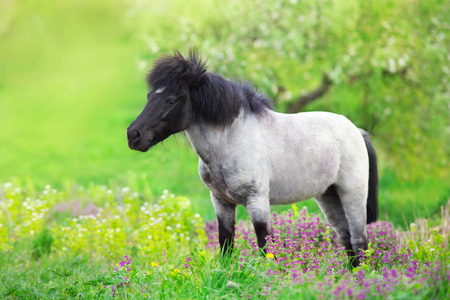 Photo for Pony standing in flowers meadow - Royalty Free Image