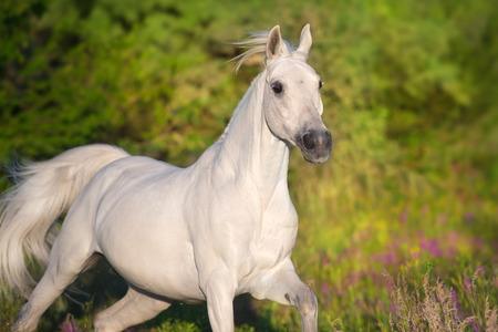Photo pour Beautiful horse in poppy flowers - image libre de droit