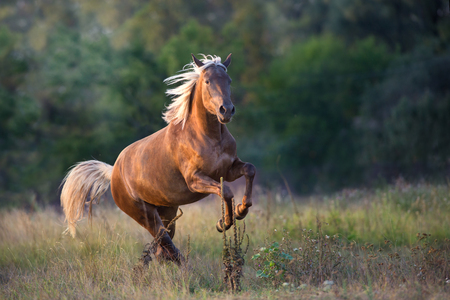 Photo for Flaxen horse run fast in meadow - Royalty Free Image