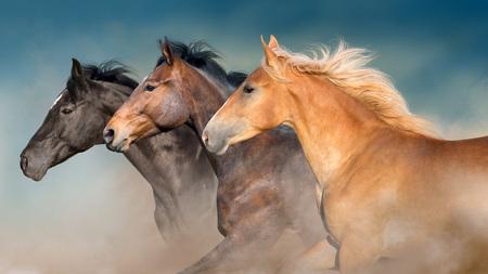 Foto de Horses herd portrait in motion with dark blue sky behind - Imagen libre de derechos