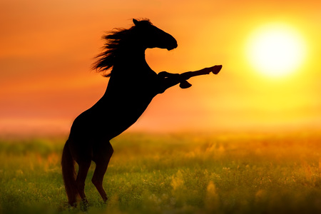 Photo for Horse with long mane rearing up silhouette at sunrise - Royalty Free Image