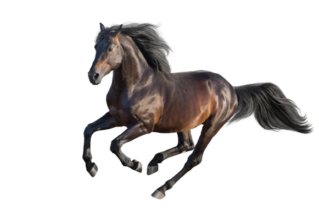Photo pour Bay stallion run gallop isolated on white - image libre de droit