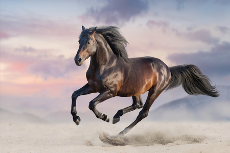 Photo pour Bay horse run gallop in desert sand - image libre de droit