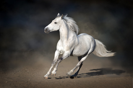 Photo pour Stallion in motion in desert dust against dark background - image libre de droit