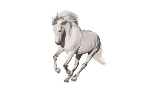 Foto de White horse isolated on white background - Imagen libre de derechos
