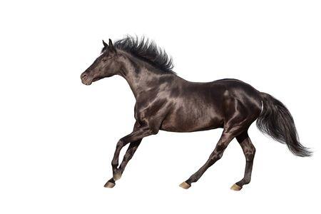 Photo pour Black horse isolated on white background - image libre de droit