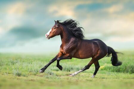 Horse with long mane close up run on green field