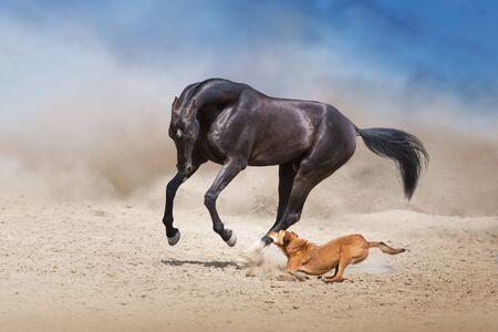 Photo pour Akhal teke Horse run with dog in desert dust - image libre de droit