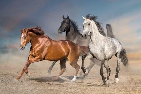Photo pour Horse herd run free on desert dust against storm sky - image libre de droit