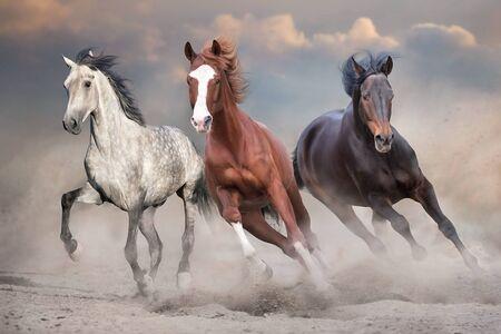 Photo pour Horses free run on desert storm against sunset sky - image libre de droit