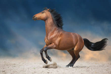 Photo pour Bay stallion run in desert sand - image libre de droit