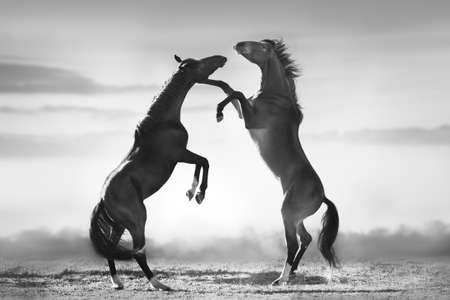 Photo pour Pony mare with foal on asture - image libre de droit