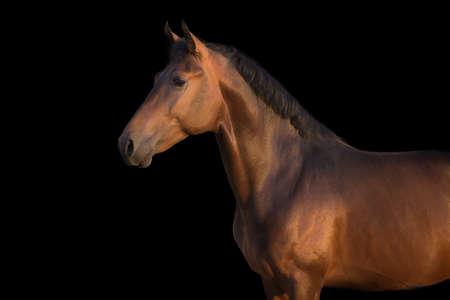 Photo pour A brown horse against black background - image libre de droit