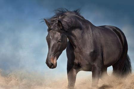 Photo pour Black horse in christmas decor. New Year and Christmas horse - image libre de droit