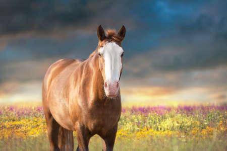 Photo pour White horse in motion with sky behind - image libre de droit
