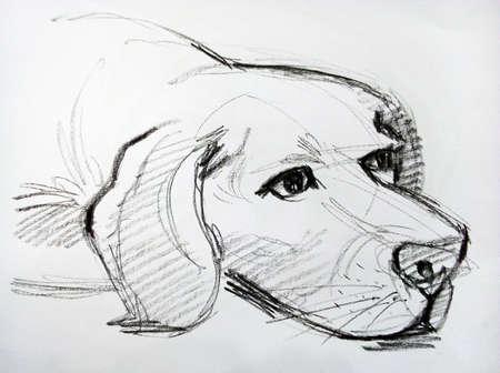 Photo pour Art  Drawing Sketch out line   cute Dog from Thailand - image libre de droit
