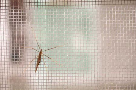 Photo pour mosquito net wire screen on house window protection against insect - image libre de droit