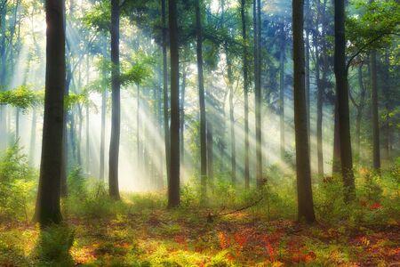 Photo pour Beautiful morning in the forest - image libre de droit