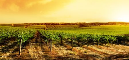 Amazing Vineyard Sunset in South Australia