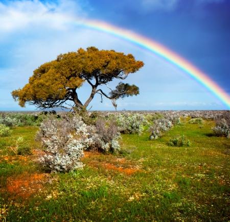 Rainbow over a lone tree