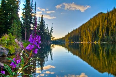 Foto de Beautiful Purple Columbine at Sunrise over Dream Lake in Colorado - Imagen libre de derechos