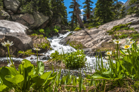 Low angle shot of lush greenery and mountain creek Colorado Rockies