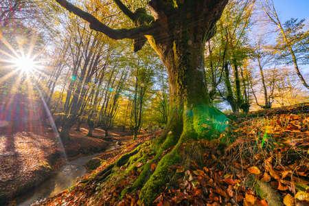 Photo pour Colorful autumn at Otzarreta forest in gorbea natural park, Spain - image libre de droit