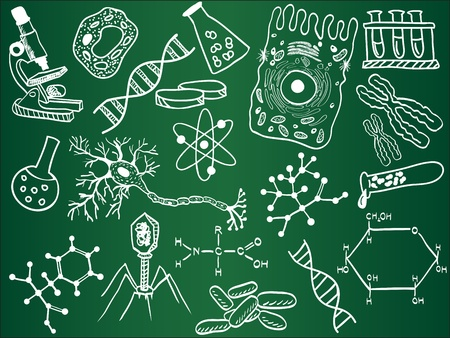 Biology sketches on school board