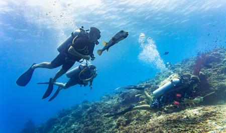Photo pour Blowfish accompanies group of tourists scuba diving at coral reef - image libre de droit