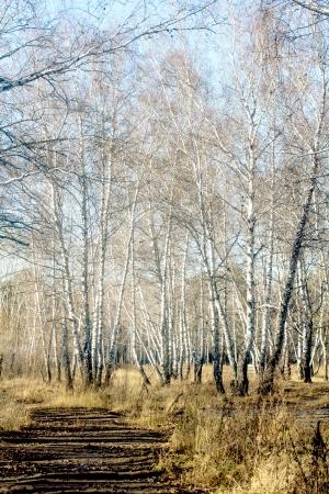 Kzwwsko131101935