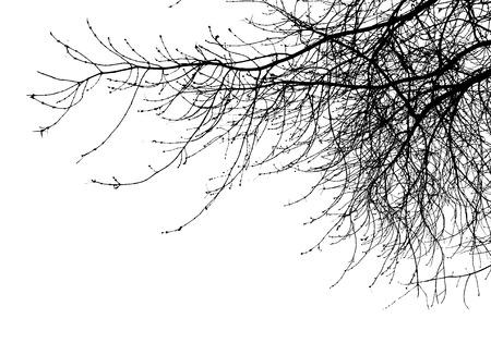 Foto de tree branches isolated on the white background - Imagen libre de derechos