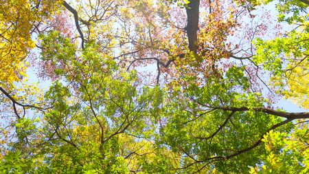 Photo pour leaves of trees view from below into the sky, autumn landscape - image libre de droit