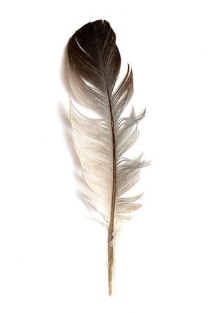 Photo pour Feather of a bird on a white background. - image libre de droit