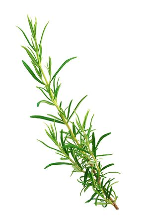 Photo for Sprig of rosemary isolated on white background - Royalty Free Image