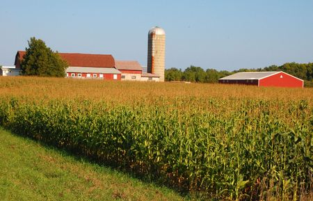 A farm with its barns and silos sits atop a hill where corn is ready to be harvested.
