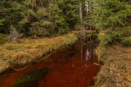 Photo for Jezerni creek in autumn color morning with red water and green beautiful forest in national park Sumava - Royalty Free Image