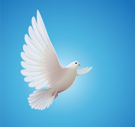beautiful shiny white dove flying way up in a blue sky