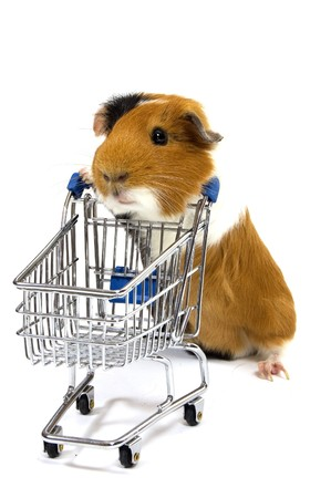 guinea pig is making shopping with a shopping car on whiteの写真素材