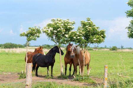 Photo pour horses walking freely, four adult horses in the field - image libre de droit