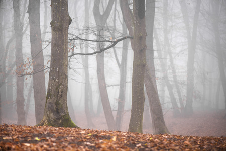 Photo pour Thick fog in the dark mountain forest in late autumn. Cold waether, winter is comming. Scary woods - image libre de droit