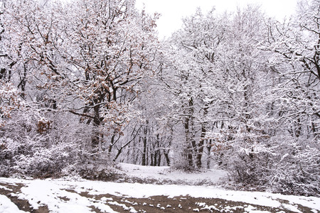 Photo pour Heavy snow storm in park. Trees covered with deep, white and fluffy snow. Beautiful winter landscape scene outdoors. Concept of shoveling backyard. Winter wonderland after snow storm and hurricane - image libre de droit