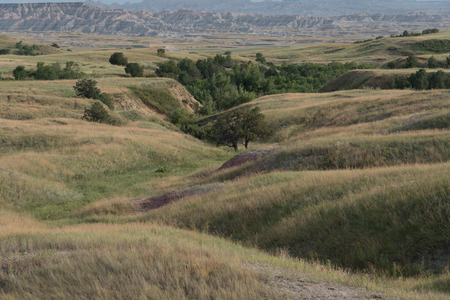 Rolling hills in the shortgrass prairie of Badlands National Park in South Dakota.  In the hill's valleys grow short Rocky Mountain Juniper Trees.