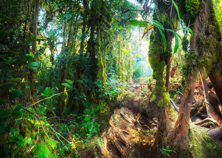Fantasy mystical tropical mossy forest with amazing jungle plants and flowers. Nature landscape for mysterious background. Malaysia