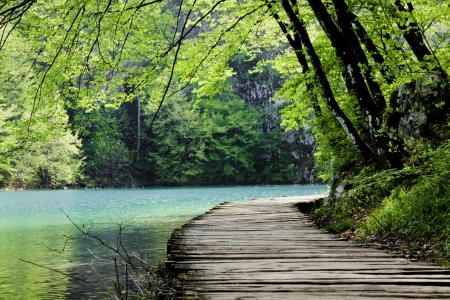 Wooden path near a forest lake. Shot at Plitvice Lakes National Park, Croatia.