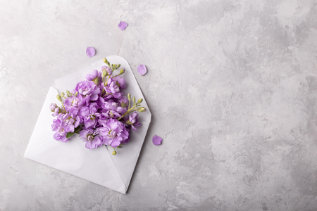Foto de Lilac matthiola flowers in an envelope over light gray stone background, flat lay with copy space - Imagen libre de derechos