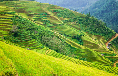 Many terraced rice fields in Sapa, Northern Vietnam. Sa Pa is a town in the Hoang Lien Son Mountains of northwestern Vietnam.