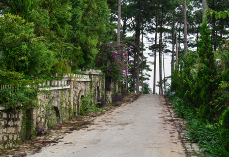 Walking road to the pine tree hill at summer day in Dalat, Vietnam.